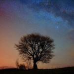 Gwiazdy Laliki drzewo droga mleczna