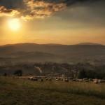 koniakow-fotograf-owce