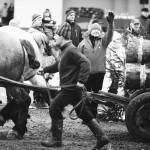 zawody-furmanów-milówka-003