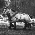 zawody-furmanów-milówka-011