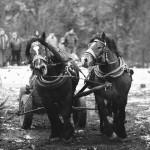 zawody-furmanów-milówka-046
