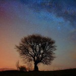 szare laliki, drzewo, noc, galaktyka, gwiazdy
