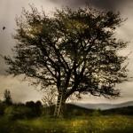 szare drzewo nad szarem